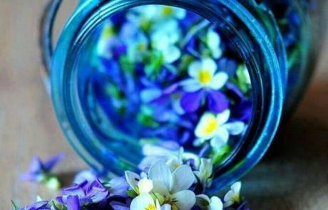 כל מה שרציתם לדעת על פרחי באך